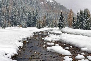 tn_480_winter_stream